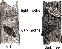 Moths and trees