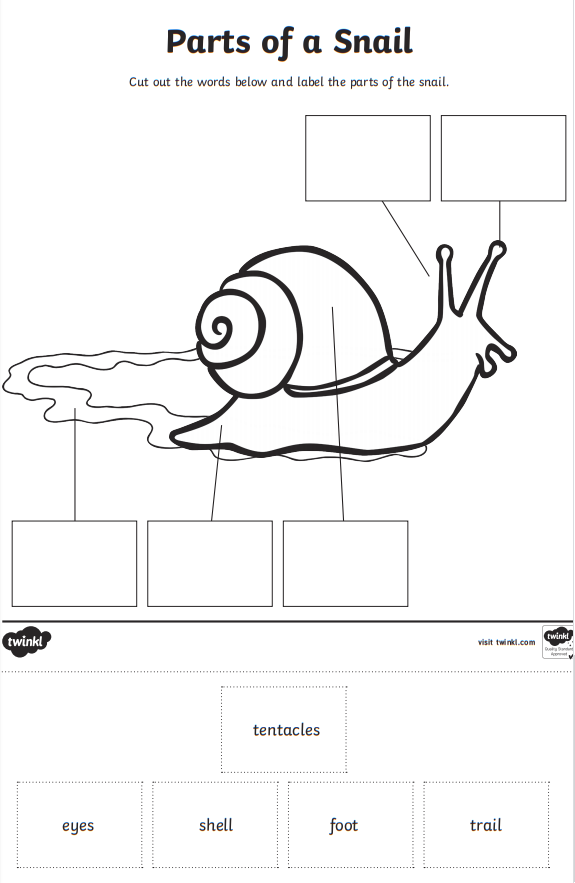 Snail Label