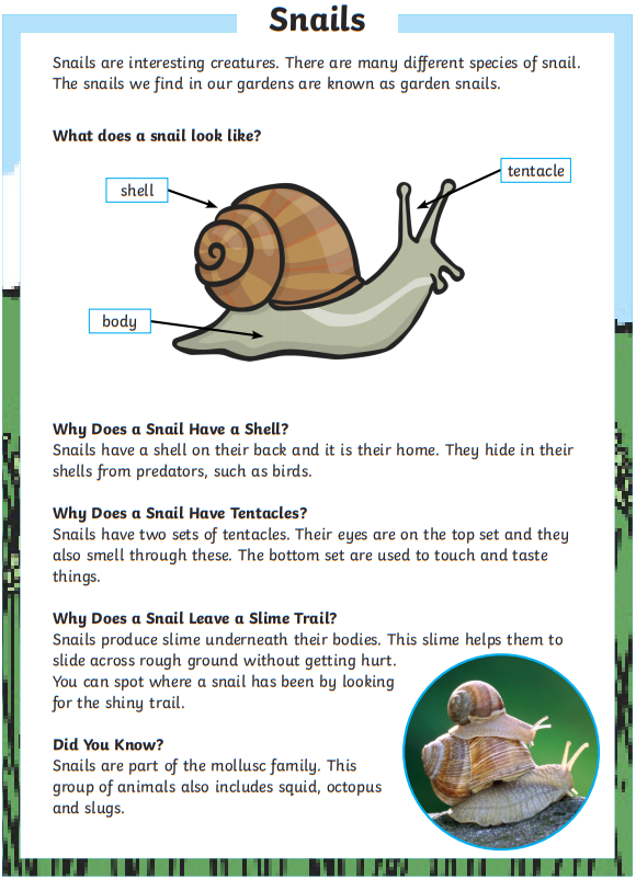 Snail Comprehension
